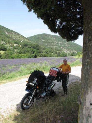 Motorradfahrer mit einer BMW R 1200 GS unter einem Walnussbaum und einem blühenden Lavendelfeld im Hintergrund in der Drôme Provencale