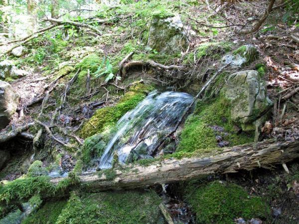 Bergquelle, aus einem grün bemoosten Felsen hervorspringend