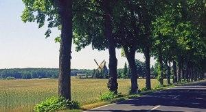 Bild von einer Allee in Brandenburg mit Eichen, einem Getreidefeld, einer Windmühle und einem Wald im Hintergrund bei einer Motorrad-Erkundungstour zu Architektur und Musik in Brandenburg