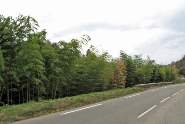 Bambouseraie de Prafrance in den Cevennen in Vorbeifahrt bei einer Motorradtour durch Provence und Camargue