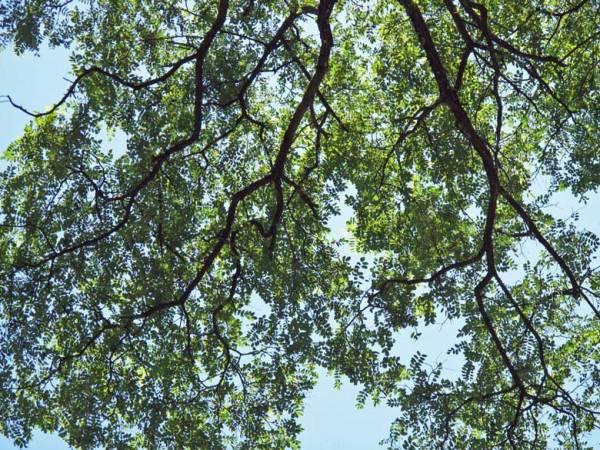 Baum im Forêt de Vallin, dem magischen Druidenwald, bei einer Motorradtour auf den Grand Colombier