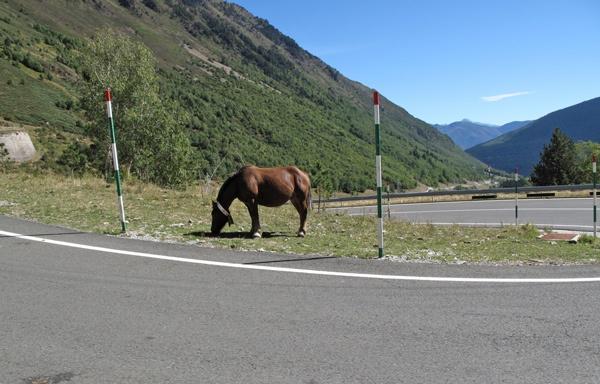 Pferd an einer Serpentine des Port de la Bonaigua in den katalanischen Pyrenäen mit Blick in das Bergtal über die Haarnadelkurve hinweg