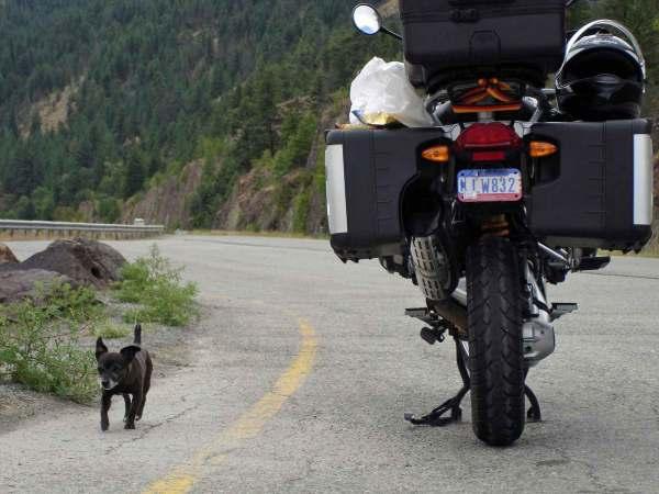 Clark Fork Valley Montana mit einem Motorrad und einem kleinen Hund bei einer Motorradtour durch die Rocky Mountains