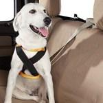 peiteira-coleira-peitoral-02 Cachorro No Carro: Como Transportar Seu Cão?