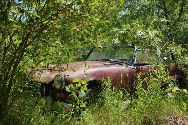 Un pobre MG Midget tapado por la maleza.