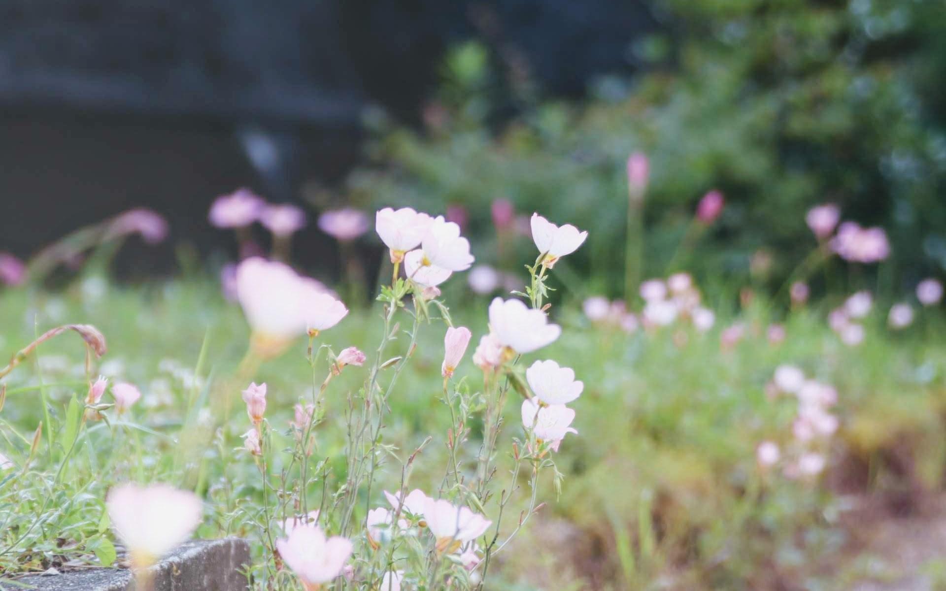 裏庭の花、初夏