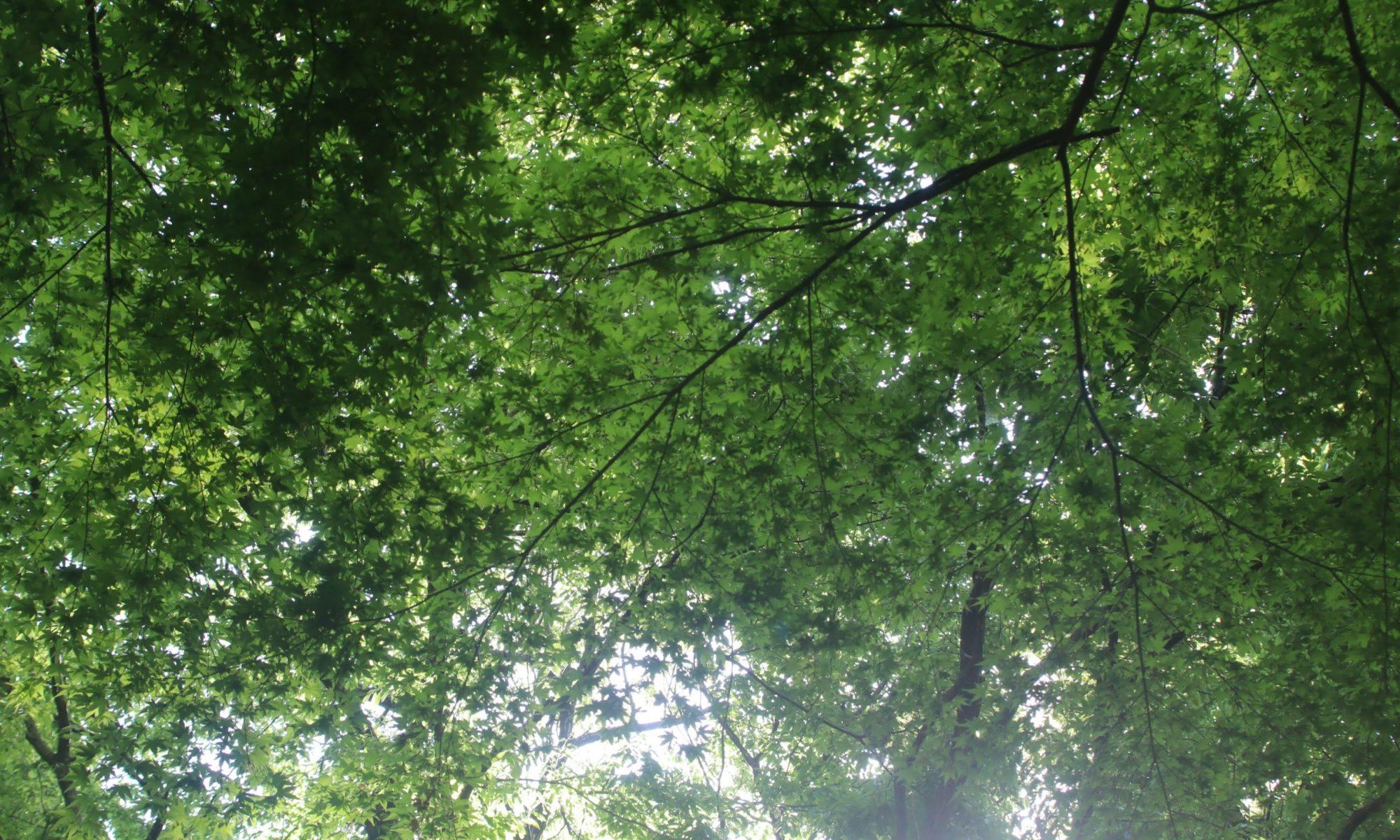 新緑桜ヶ丘公園