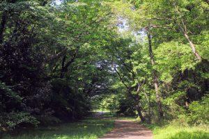 桜ヶ丘公園春