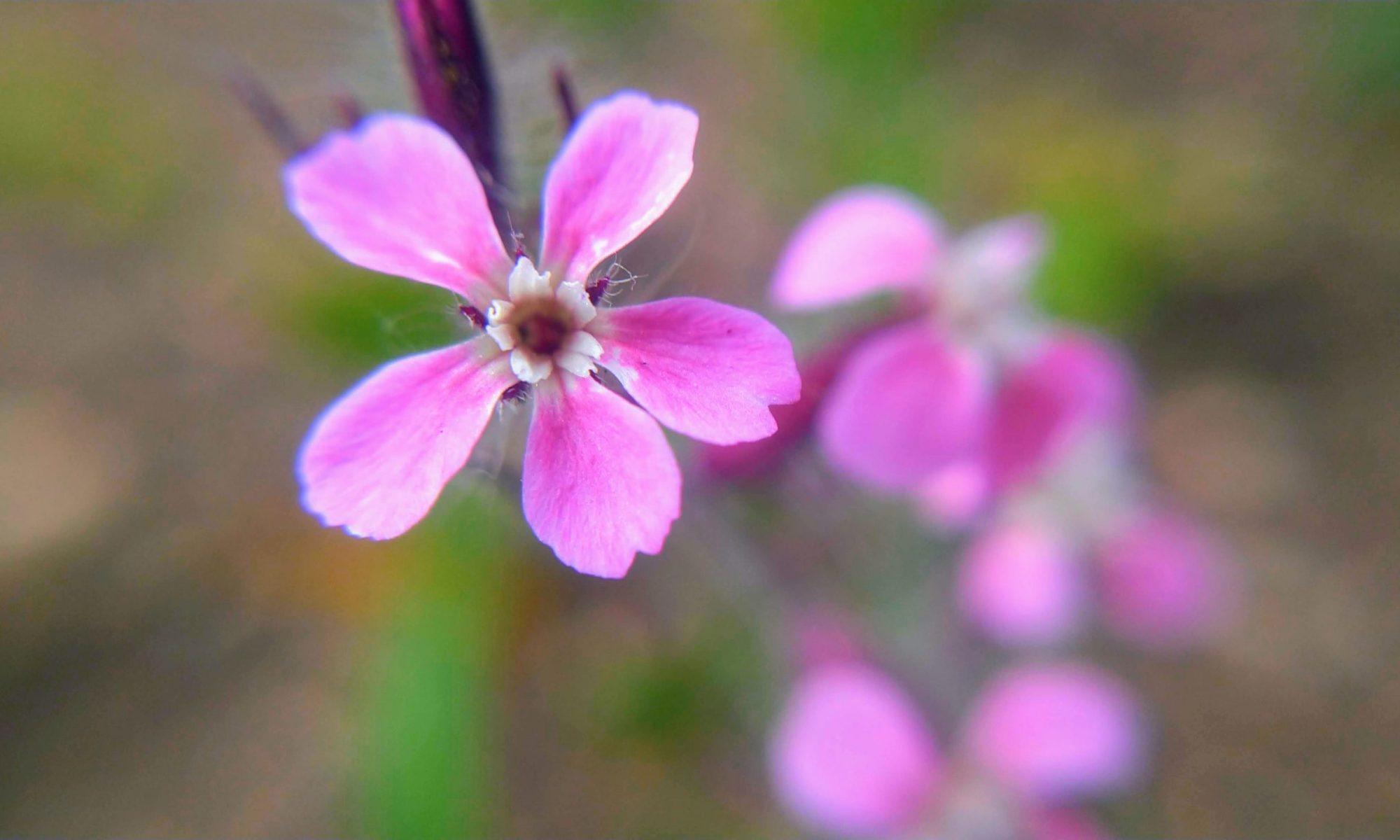 1ミリの花