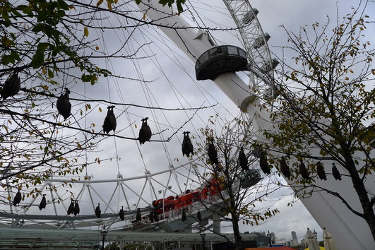 Two rows of large real-looking toy fruit bats hang upside down from clotheslines in front of the London Eye