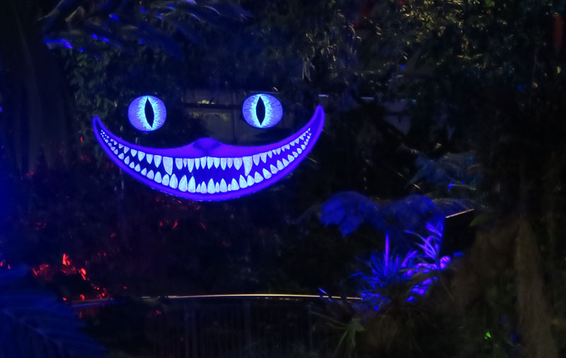 Cheshire Cat at Calgary Zoolights | Jill Browne