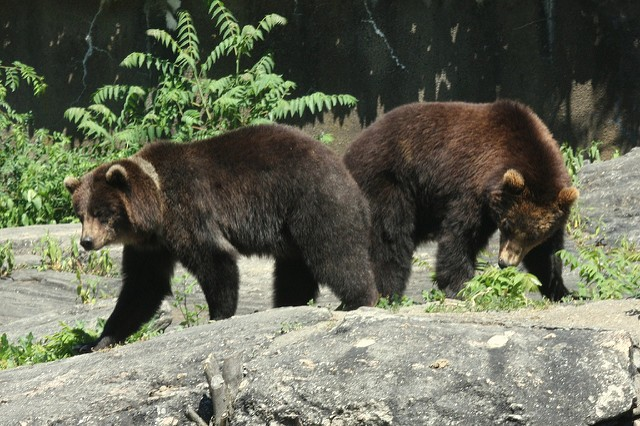 The Bears Are Back on The Prowl as Stocks Sink - The Daily Rundown