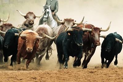 5 Monster Stock Market Predictions For The Week of November 11