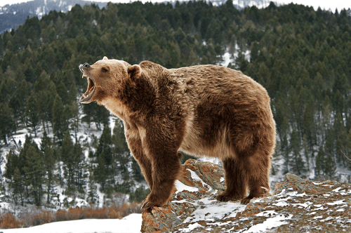 Stocks Are Set To Drop On September 30 As The Roar Of The Bears Roar Grow Louder