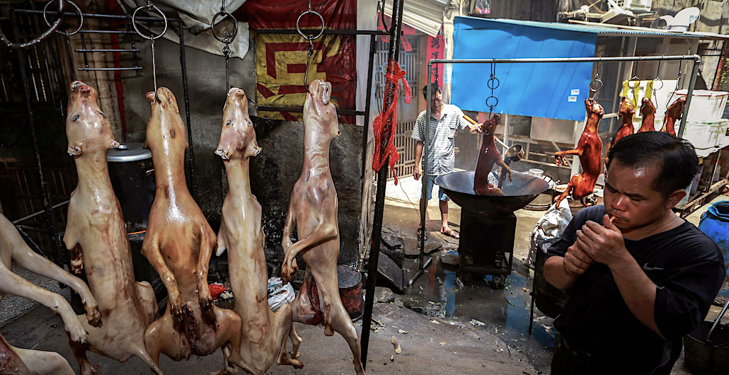 Why China's Yulin Dog Meat Festival Won't Be Cancelled This Year After All