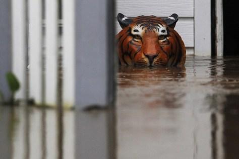 tigre-ornamento