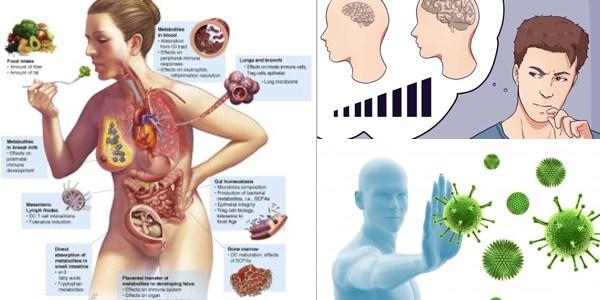 Fundament sprawnej psychiki i układu odpornościowego – Jedzenie probiotyczne i prebiotyczne