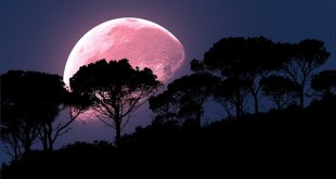 The pink moon
