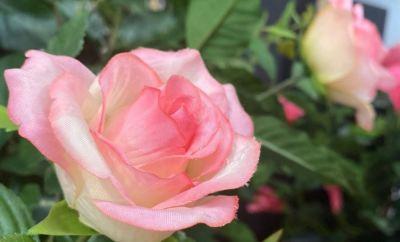 voordelen kunstplanten