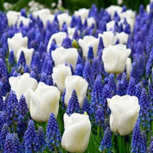 Цветы многолетники для сада неприхотливые долгоцветущие ...