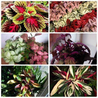 Цветы кустовые фото: 36 декоративных кустарников для сада ...