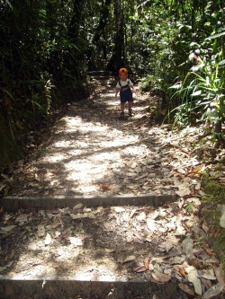 My son in one of the jungle trail of Kinabalu