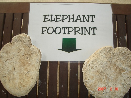 Elephant footprint