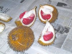 Red durian