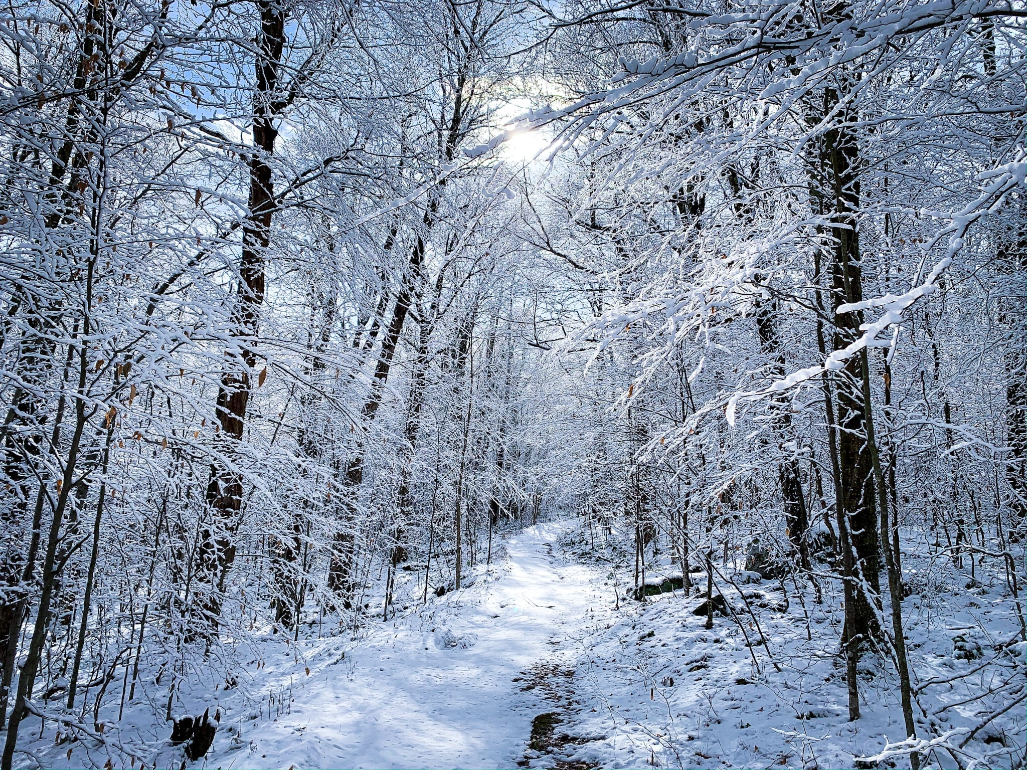 snow-covered trees on hiking trail