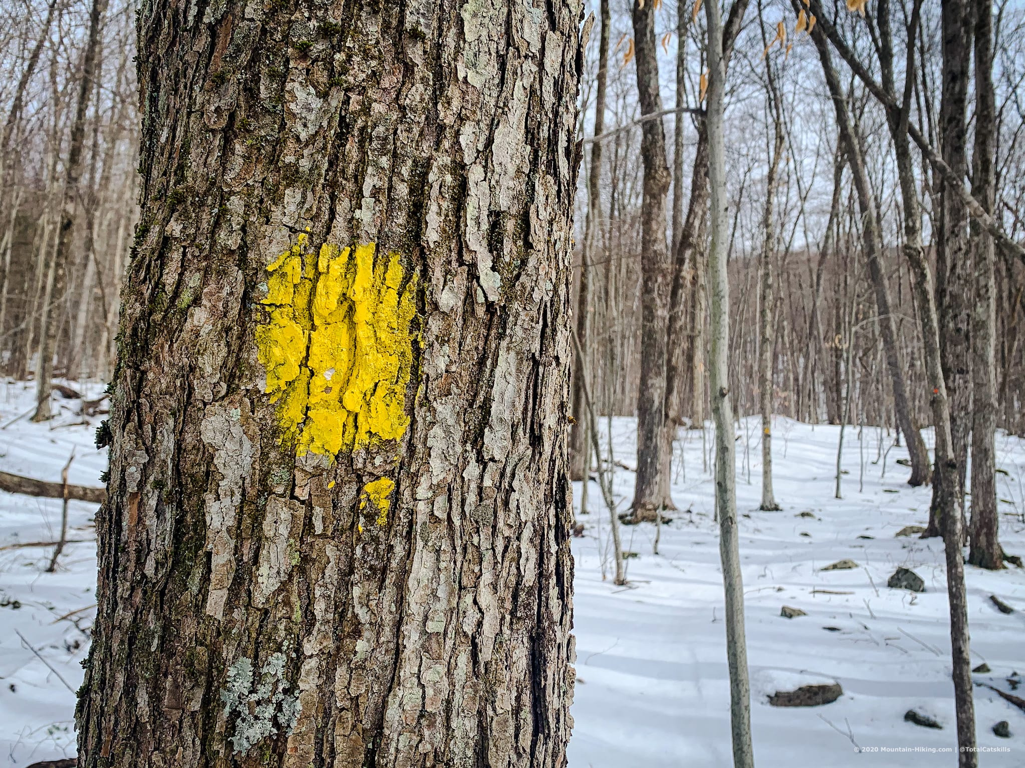yellow blaze on tree