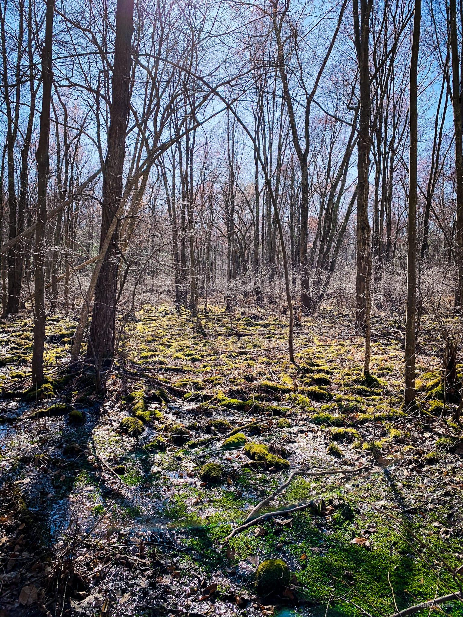 swamp, trees