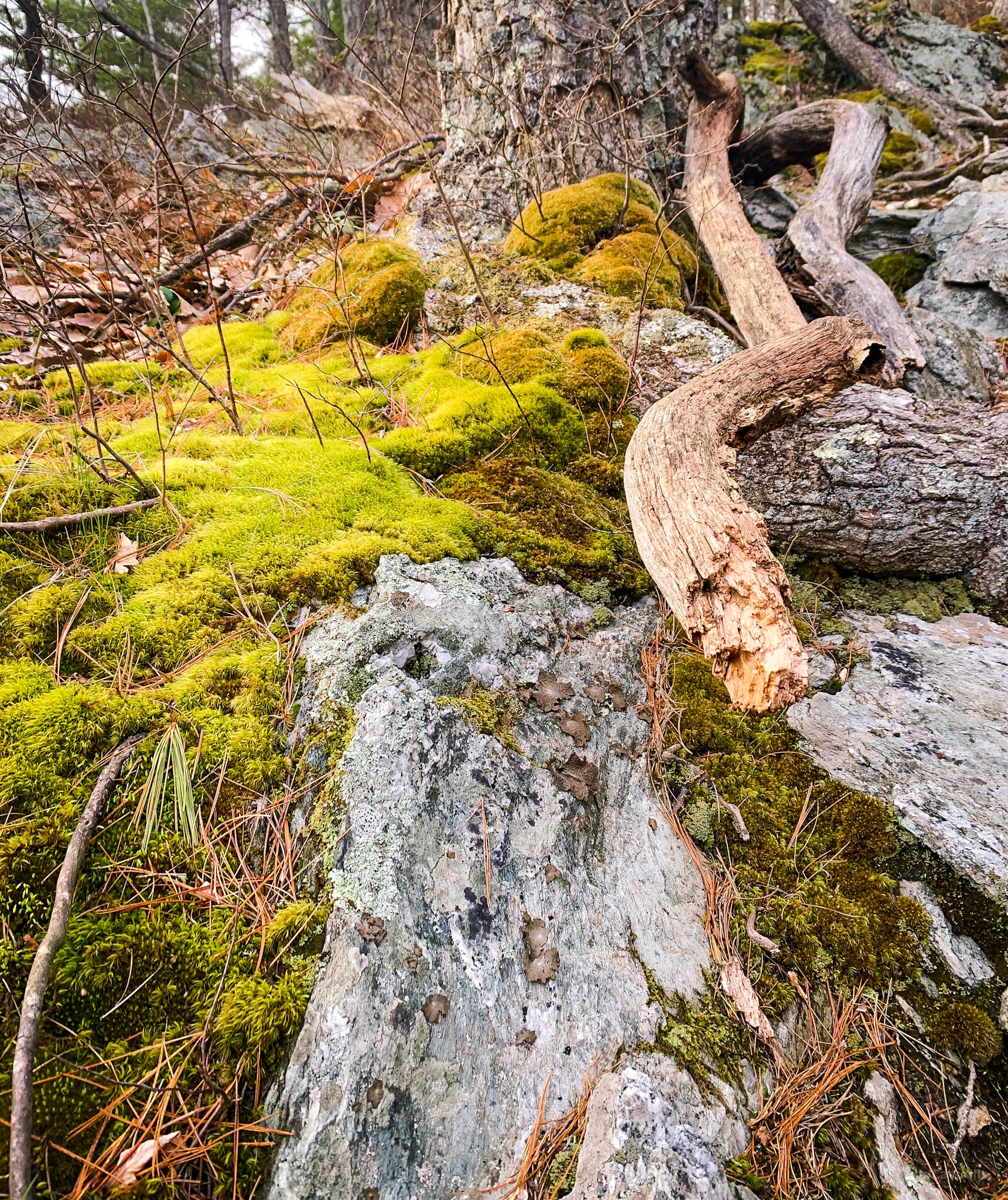 still life with rock, branch, moss