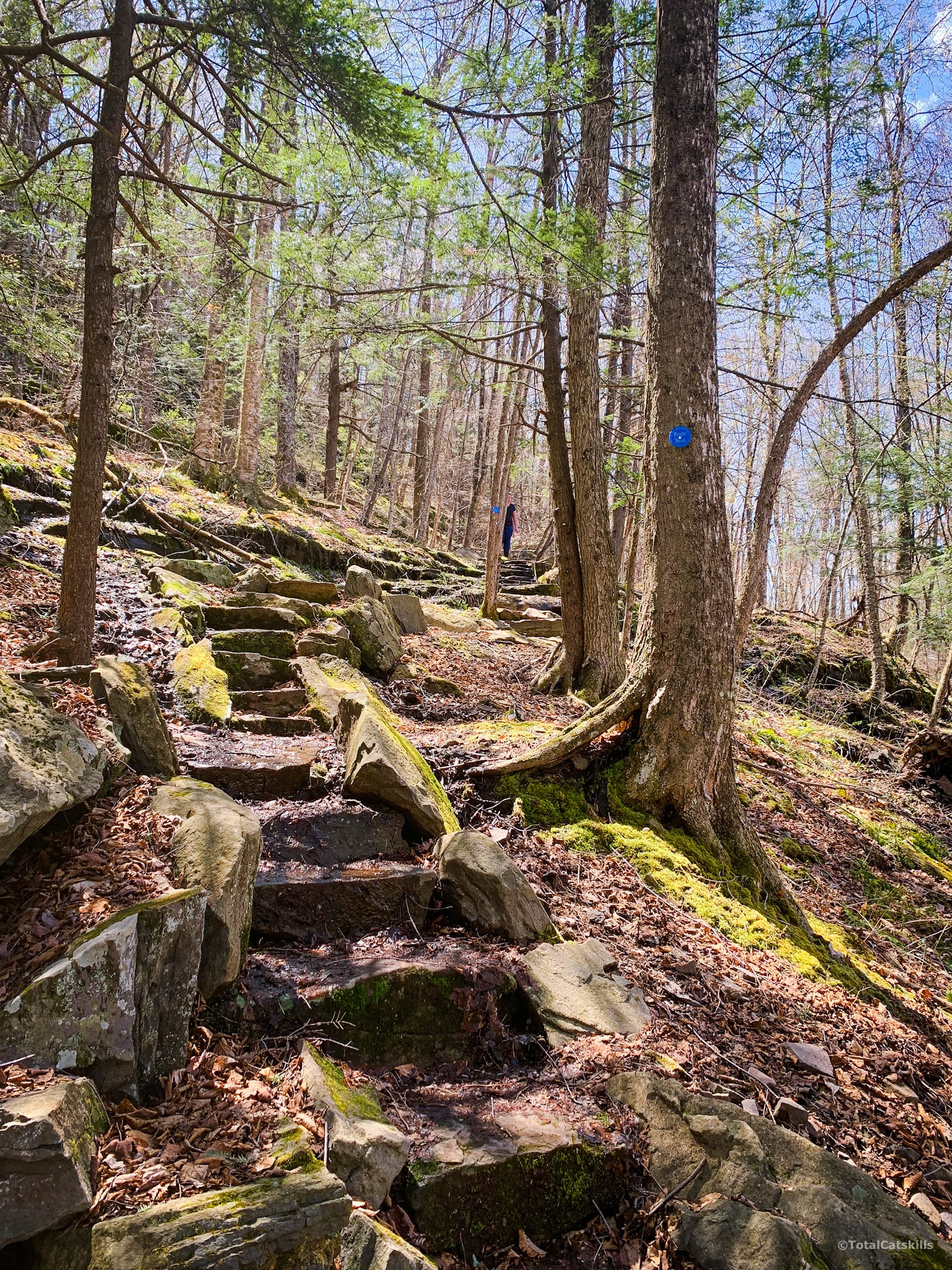 cut steps uphill in woods