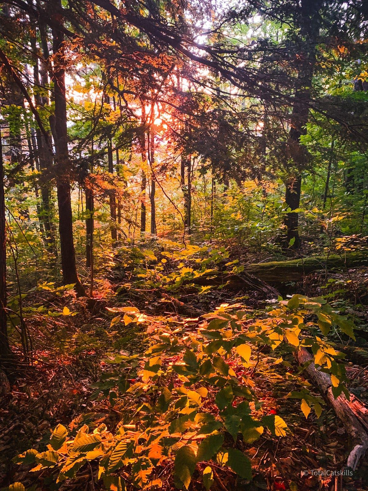 woodsy sunrise