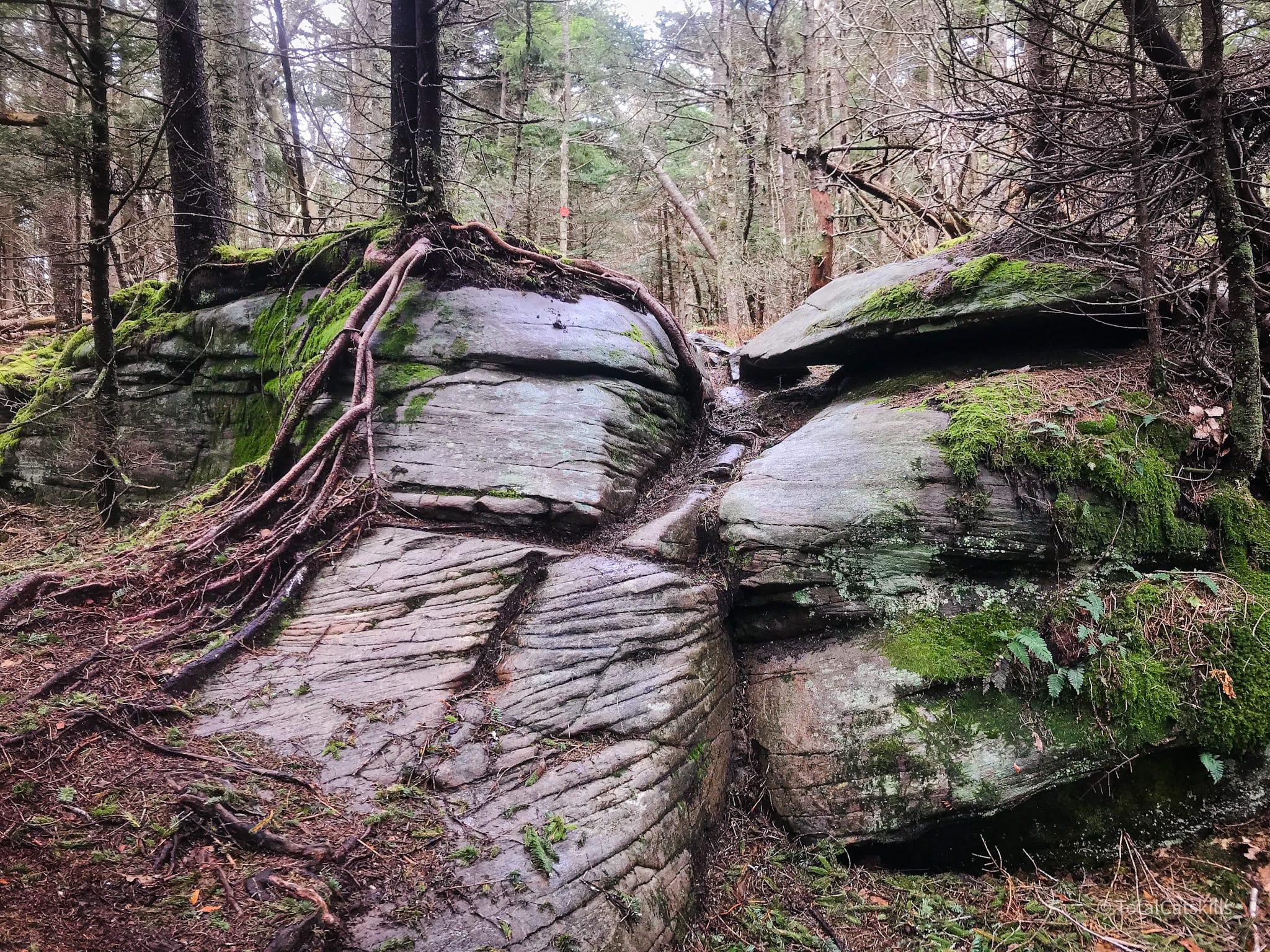 boulders in woods