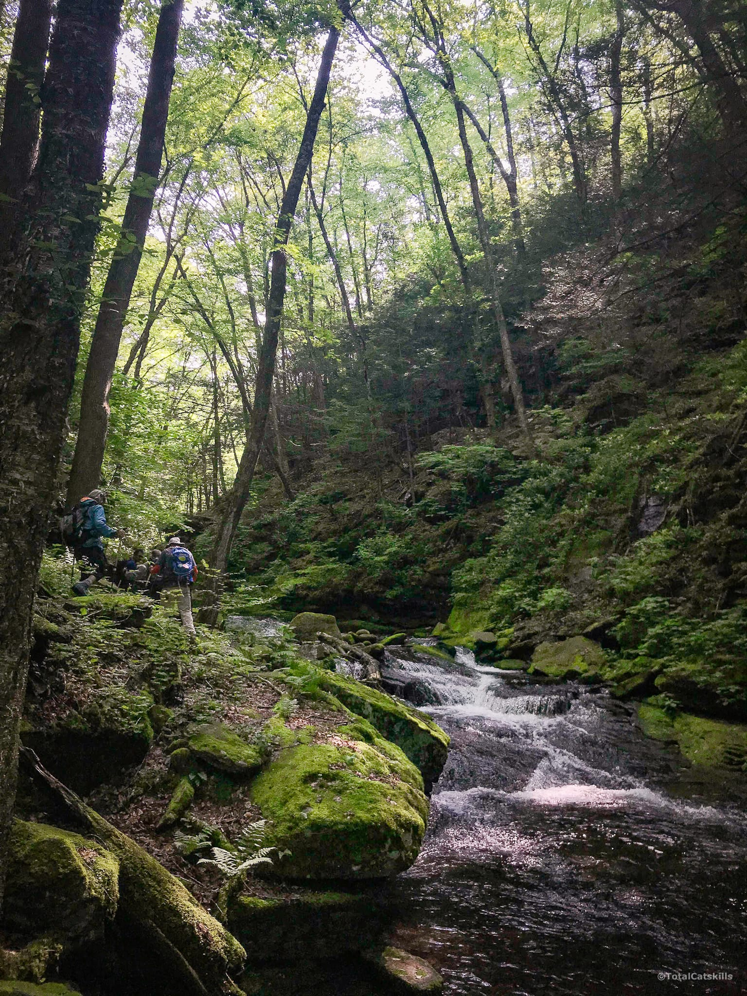 forest stream, hikers