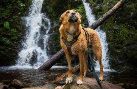 wet dog in front of waterfall