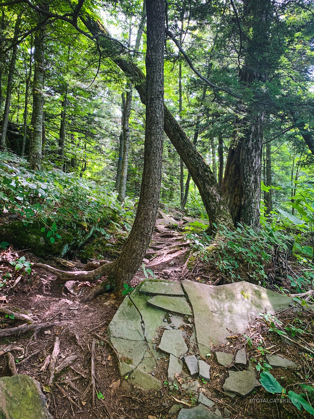 rocky woodsy trail