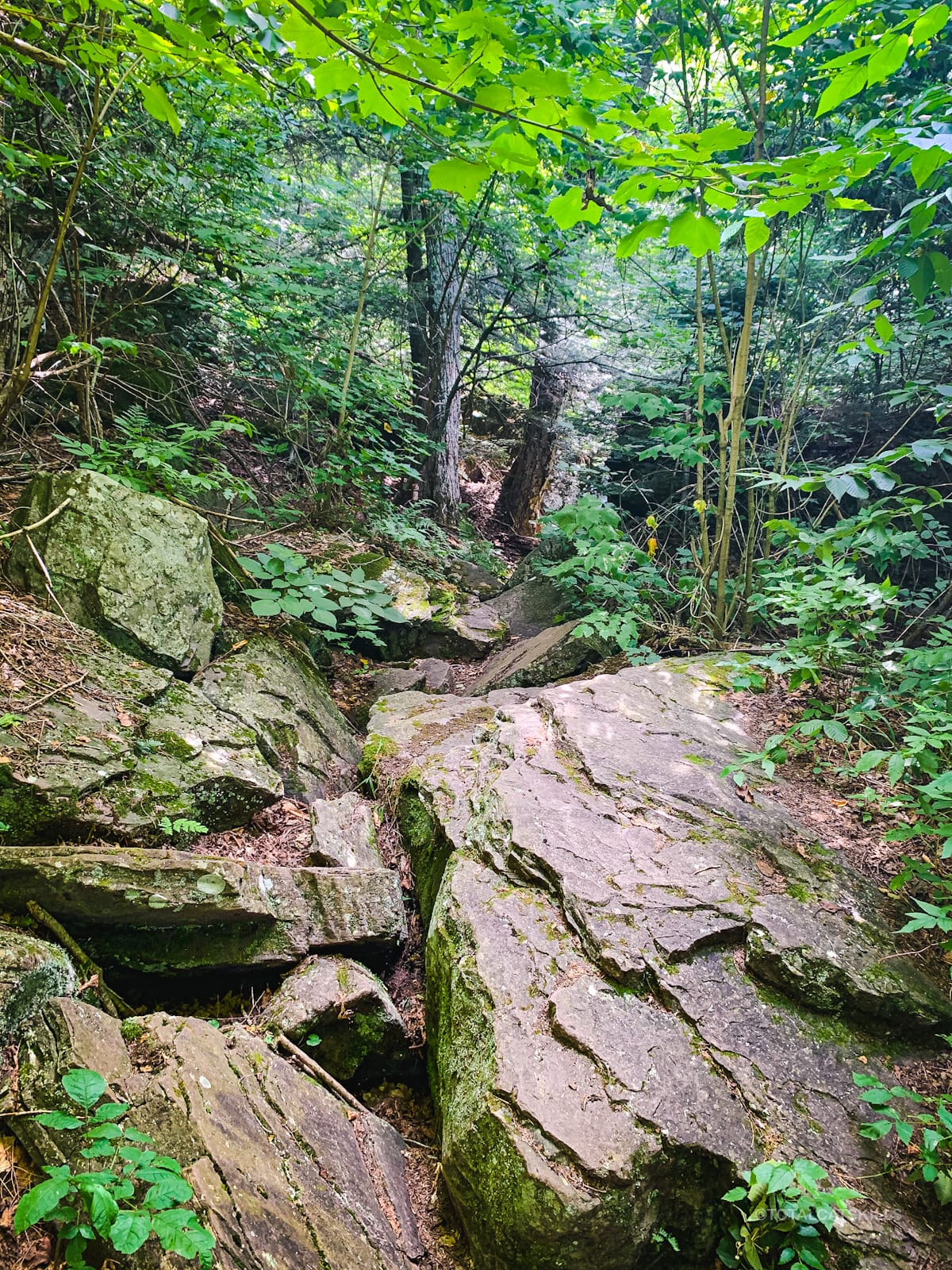 rocky trail bed