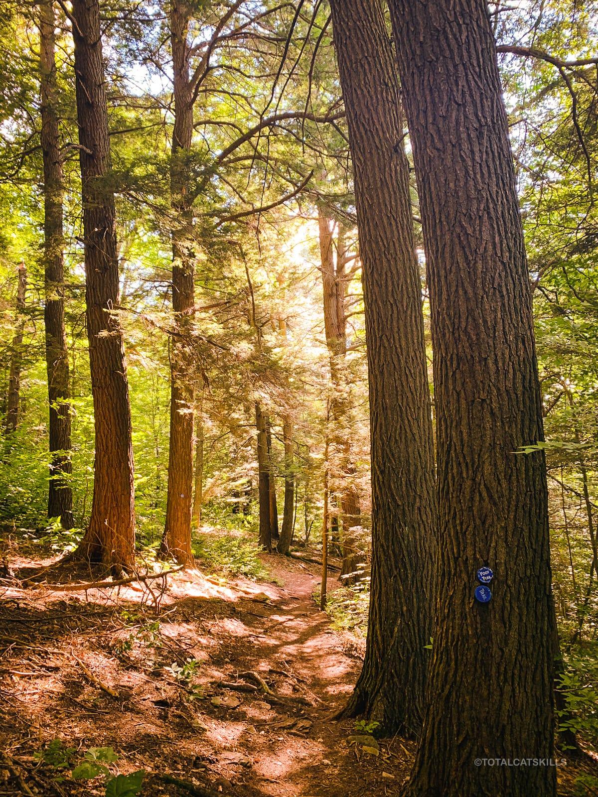 dappled woods light