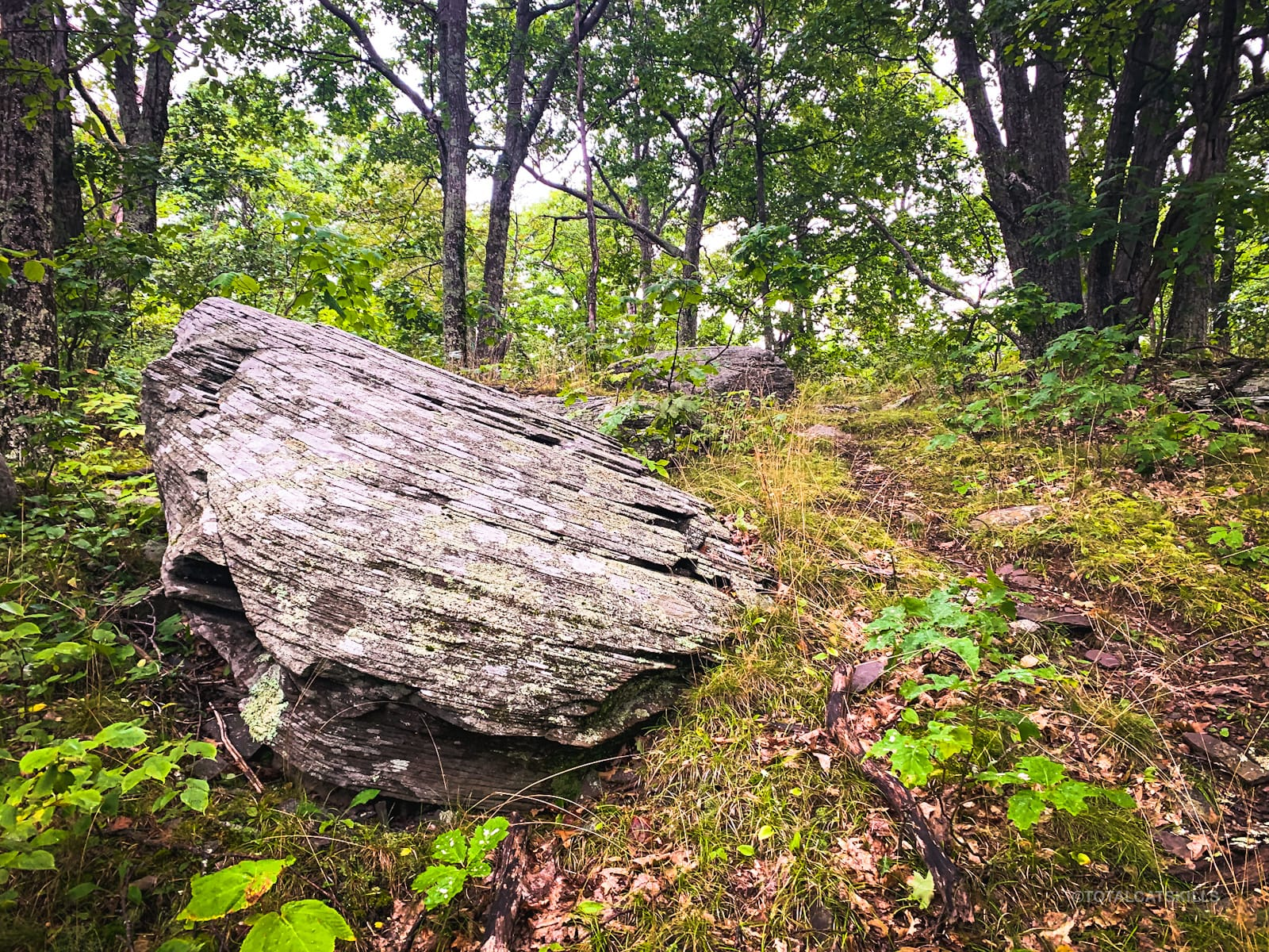 erratic boulder in woods