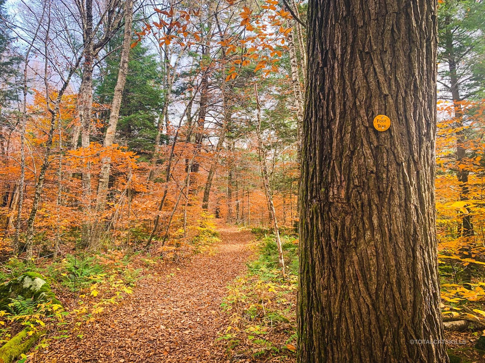 yellow trail blaze on tree trunk