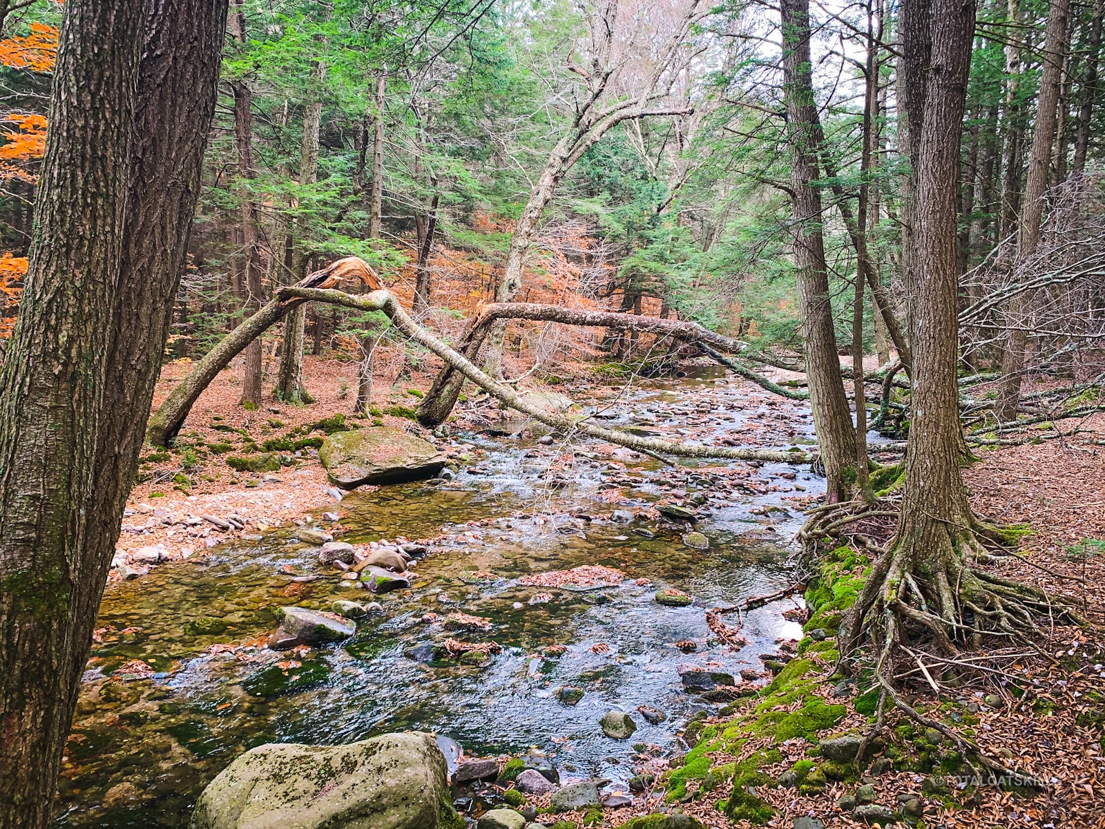 fisherman's path stream trough woods