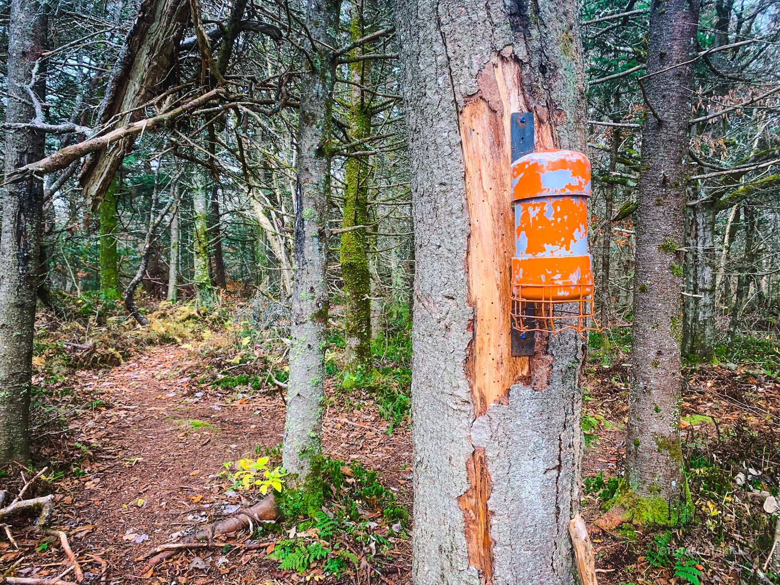 rocky and lone: orange canister on tree trunk