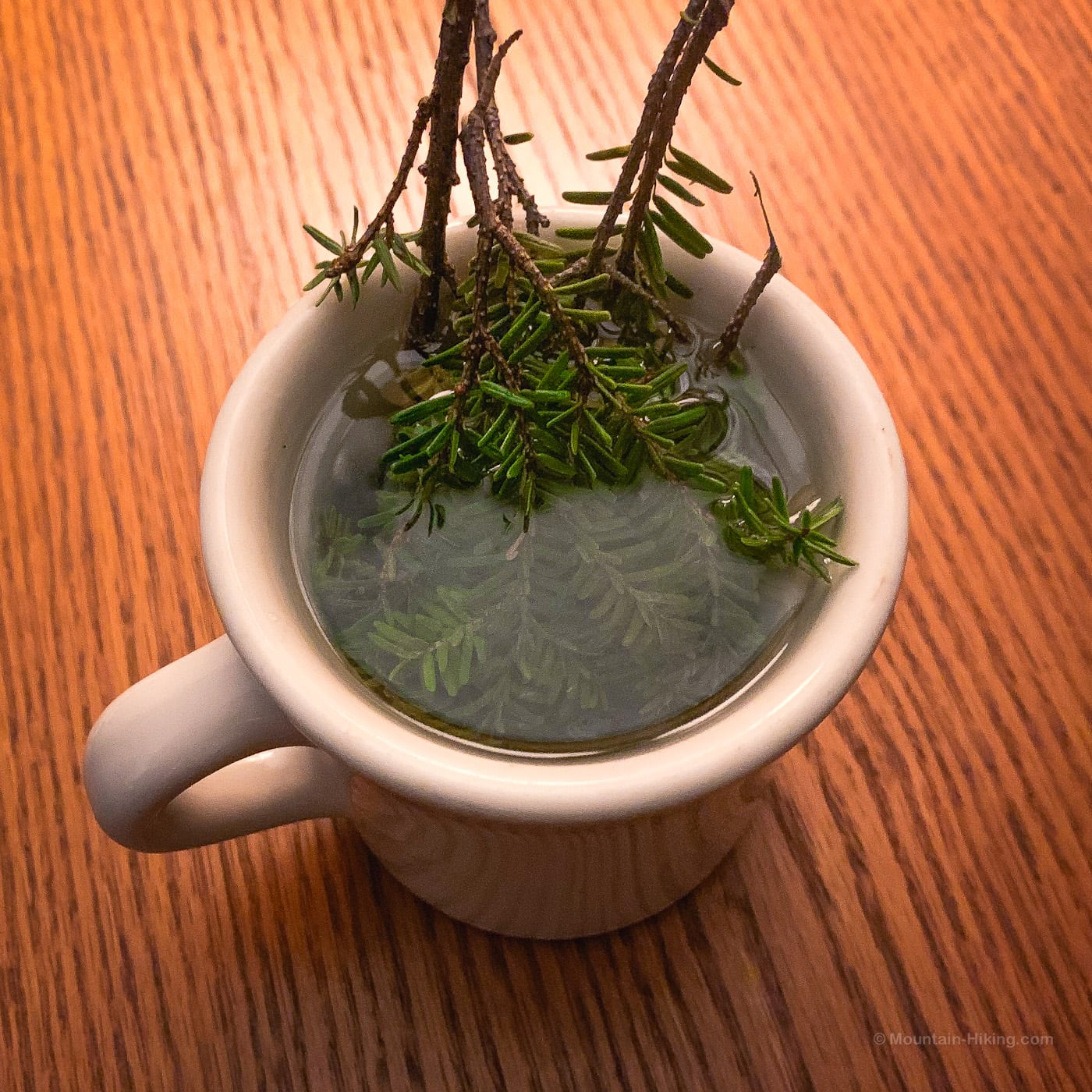 brewing pine needle tea / hemlock twigs in hot water