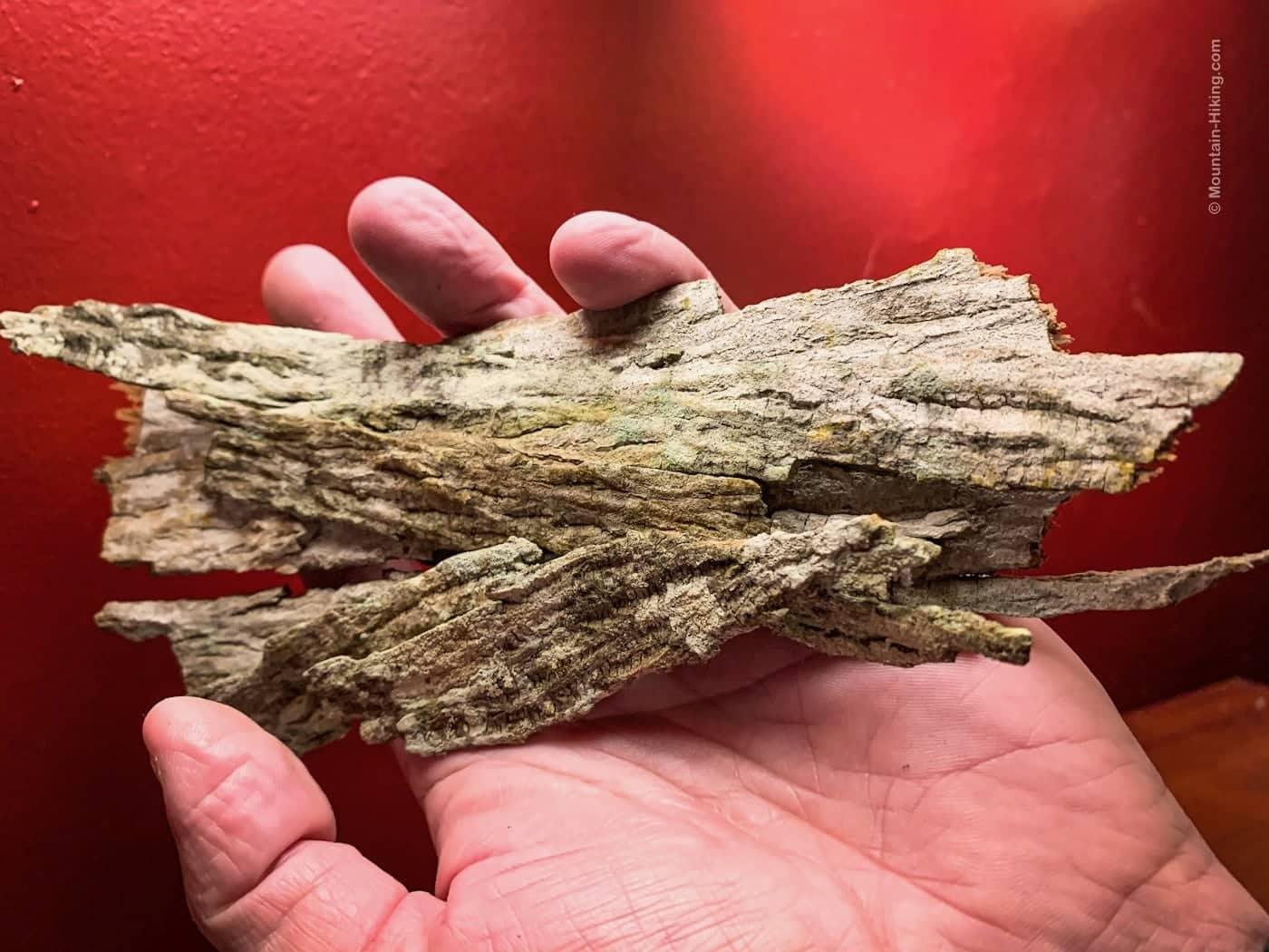 hand holding Shagbark Hickory bark