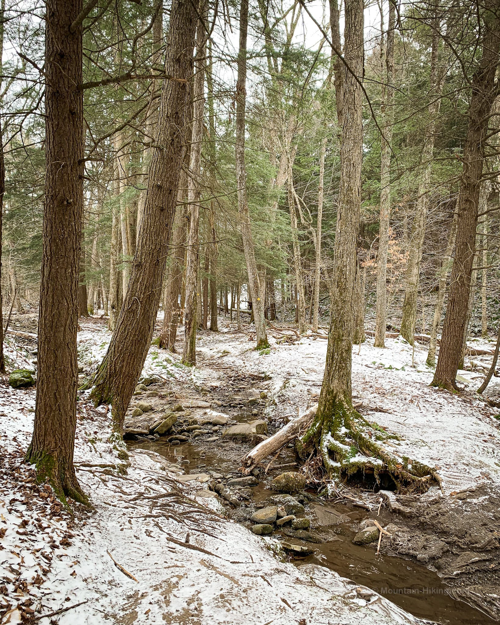 dry brook forest and stream