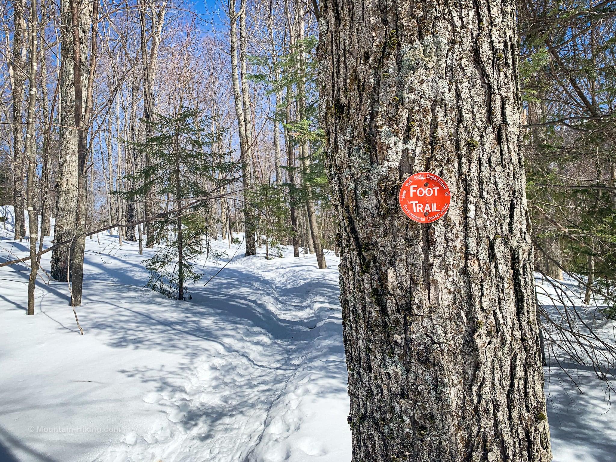 trail blaze on tree trunks