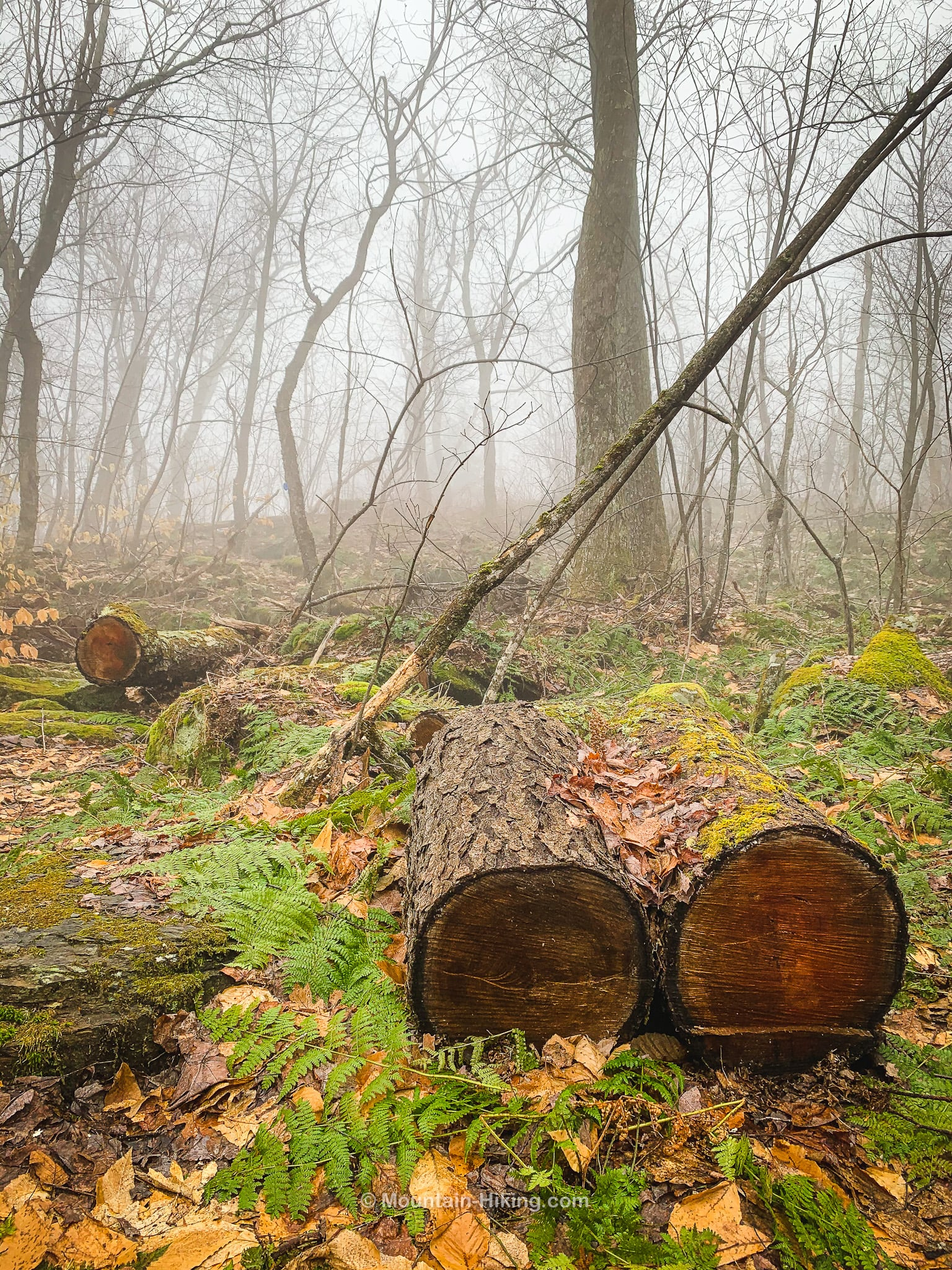 sawn trunk sections in woods