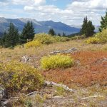 Hiking Black Powder Pass to Boreas Mtn
